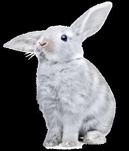 rabbit_PNG3804
